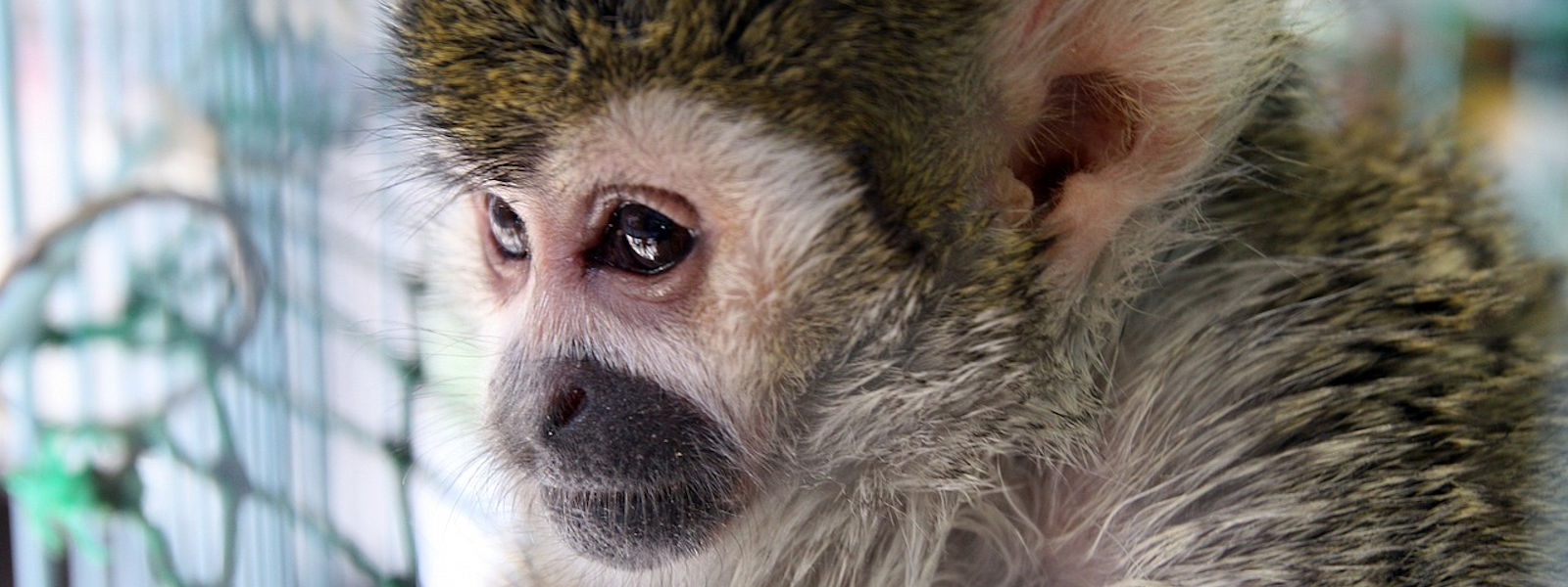 Nos amis les singes: grooming, schmoozing, etc.